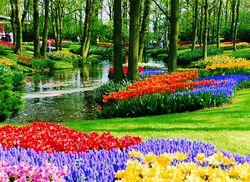 NL_Keukenhof_Tulpenblüte